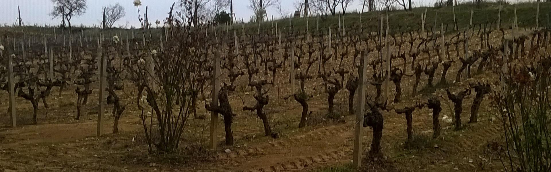 Vinsmagninger