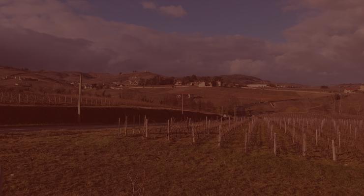 wine-composition-2